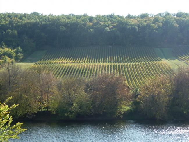 Vineyard on the slopes